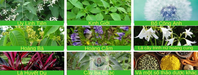 Thành phần thuốc chữa bệnh viêm nhiễm phụ khoa Mộc Hương