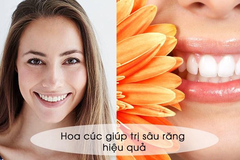 Hoa cúc giúp chữa bệnh sâu răng hàm hiệu quả