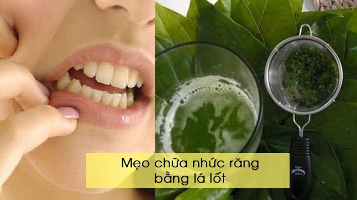 Mẹo chữa nhức răng bằng lá lốt