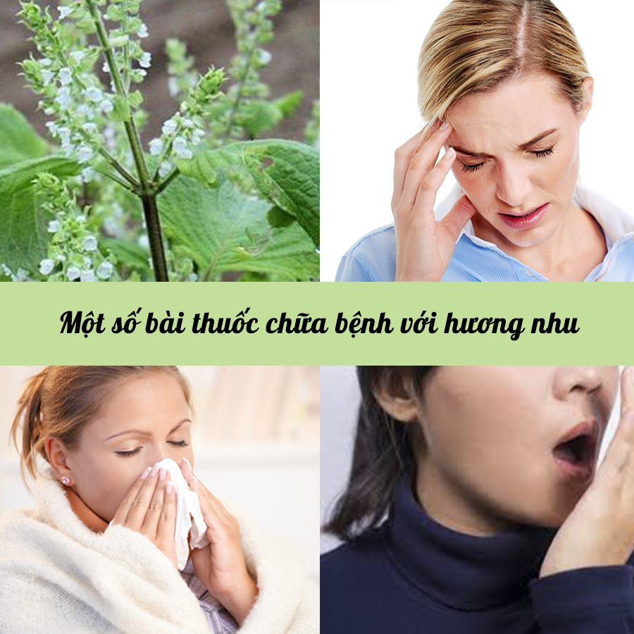 Một số bài thuốc chữa bệnh với hương nhu