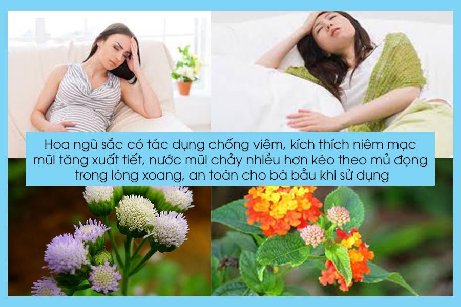Cách chữa viêm xoang cho bà bầu bằng hoa ngũ sắc