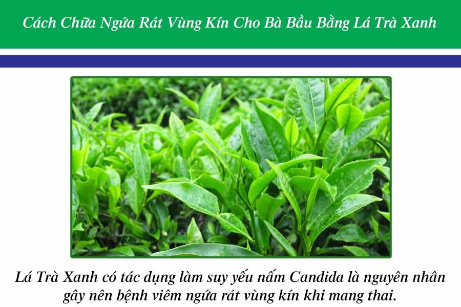 Cách chữa ngứa rát vùng kín cho bà bầu bằng lá trà xanh