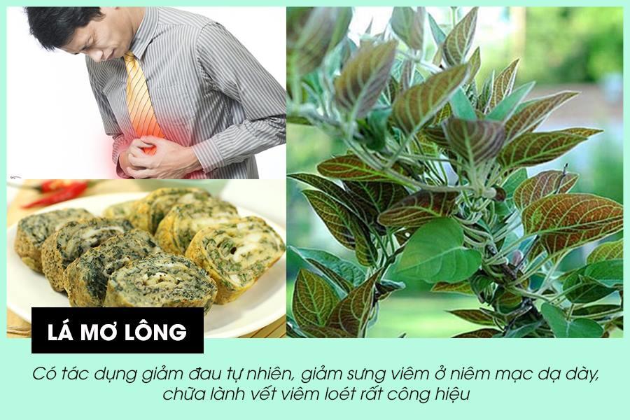 Lá mơ lông là vị thuốc nam chữa đau dạ dày hiệu quả