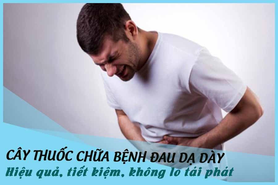 Cây thuốc chữa bệnh đau dạ dày