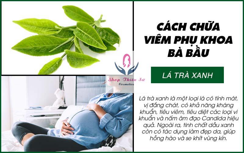 Cách chữa viêm phụ khoa bà bầu bằng lá trà xanh